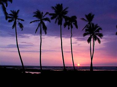 Hawaiian_nightjpg.jpg