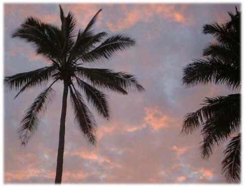 palmtree_01.jpg
